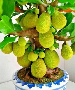 Miniature Handmade Jackfruit Tree Artificial Fruit Home Decor Green Fake Plant