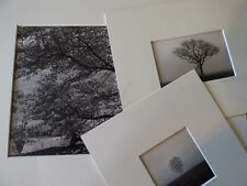 3 PHOTOGRAPHIES ORIGINALES NATHALIE LOUIS 2013 ARBRE PAYSAGES EN NOIR ET BLANC