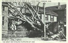 Mt Auburn Street Cambridge Massachusetts 1938 Hurricane Damage Disaster Postcard