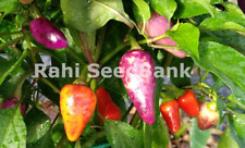 Jalapeno Multicolour Chilli - Bright, Colorful Addition to Your Garden, Oz Grown