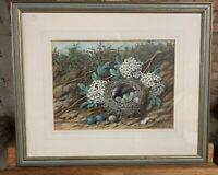 Original 19thC Watercolour Of A Bird's Nest By The Artist William Cruickshank