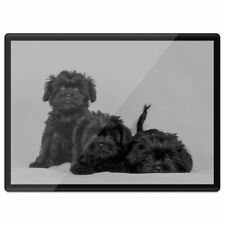 Plastic Placemat A3 BW - Affenpinscher Black Dog Puppy  #35226