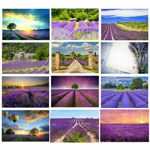 Romantic Lavender Photography Backdrop Studio Baby Video Photo Background Props