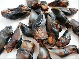 [500g] Dried rare DEER venison HOOVES treats snacks 100% NATURAL long lasting