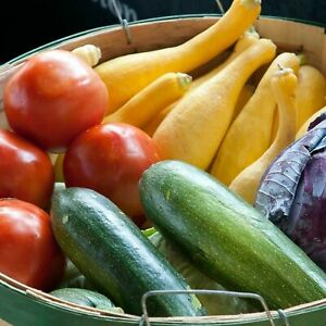 Heirloom 1.99 Vegetable Garden Seeds 250 Varieties Combined Shipping .99 NON GMO