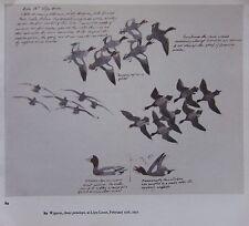 BEAUTIFUL VINTAGE BIRD PRINT ~ WIGEON STUDIES ~ TUNNICLIFFE