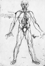 Leonardo Da Vinci Cardiovascular System  Anatomy Poster Print Art
