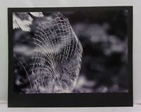 16X20 Original Print Photograph Matted Nature Spider web Interior Signed