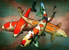 "3.25"" Vintage Japanese watercolor Koi Fish Art Print STICKER. Aquarium, Pond."