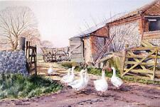 Martin Sexton watercolour 'Gossiping Geese' Norfolk farmyard animals signed