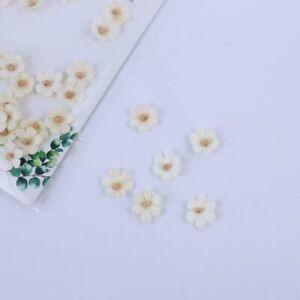 Mini Daisies Ivory Flowers 60pcs Crafts Card Embellishments FL013