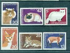 CHATS - CATS BULGARY 1983
