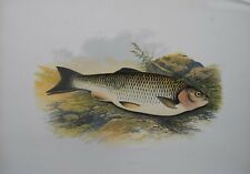 """Fish - Chub For Houghton'S """"Fresh Water Fishes"""", 1879"""