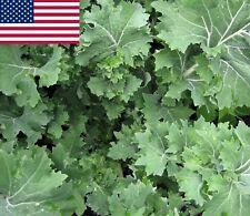 Siberian Kale- Heirloom Organic Variety- 500+ 2018 Seeds