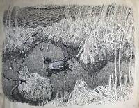 Karl Adser Zeichnung Blesshuhn im Schilf beim Nestbau im Frühling Wasservögel