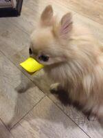 Adjustable Muzzle Biteproof Duck Mouth Dog Muzzle Anti-bite Mask Silicone UK