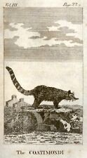 Goldsmith's Animated Nature -1795- ANIMAL - COATIMONDI