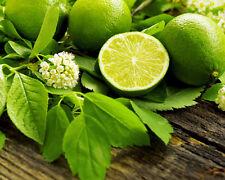 Huile Essentielle de Lime / Limette / Citron vert 100% pure et naturelle top Qua