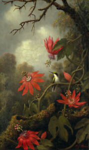 Martin Johnson Heade Hummingbird and Passionflowers Giclee Canvas Print Poster