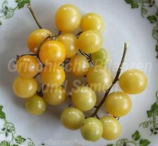 SNOWBERRY Tomate*historische Mini-Tomaten weiß*10 Samen