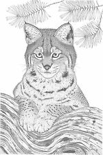 """Can. Wildlife Bobcat  Print 18""""x24"""" Pencil  """" Waiting For Mom """""""
