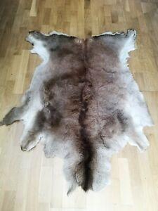 Large Red Deer Hide (Scottish)