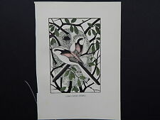 BIRDS, ERIC FITCH DAGLISH, Engraving, c. 1948 Long-Tailed Titmice #21