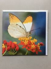 Blank Inside Greeting Cards Animals & Nature - Great Orange Tip Butterfly
