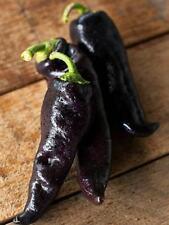 20 Sweet Pepper Seeds GYPSY BARON Russian Heirloom Vegetable Black&Rare