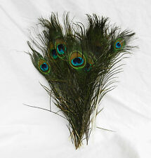 Pack of Ten Peacock Feathers - Decor / Flower Arranging / Crafts - UK SELLER