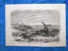 Gravure Année 1862 - Gazelle forcée par le faucon - Gazzelle attratte dal falco