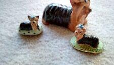 3 different Yorkshire terriers Basil Matthews