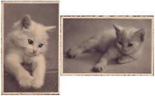 OLD Set lot 2 pcs CAT Kitten PC post card 1920th feline unused France LOVELY!