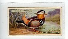 (Jc2765-100)  OGDENS,FOREIGN BIRDS,MANDARIN-DUCK,1924,#13