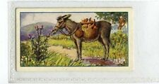 (Ja8515-100)  GALLAHER,AESOPS FABLES,THE ASS EATING THISTLES,1931#10