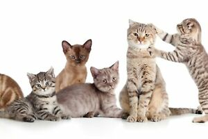 VLIES FOTOTAPETE Tapete Wandbilder XXL Wohnzimmer Reizvolle Katzen KÄTZCHEN 3485
