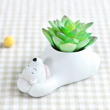Sn _ Wo _ Couché Ours Polaire Affichage Cour Jardin Décor Succulent Plantes