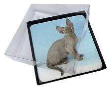 4x Blue Grey Devon Rex Kitten Cat Picture Table Coasters Set in Gift Bo, AC-175C