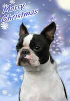 Boston Terrier Dog A6 Christmas Card Design XBOSTON-1 by paws2print