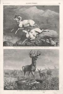 Three Cheers for the Ears by Mary Roberson Mule Deer Wildlife Print