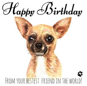PERSONALISED BIRTHDAY CARD FROM THE DOG- CHIHUAHUA CHIWAWA PET LOVER BEST FRIEND