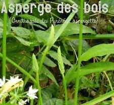 Lot de 10 Bulbes  Asperge des Bois , bio, naturel,  sauvage