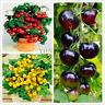 200 PCS Seeds Bonsai Tomato Garden Cherry Potted Fruit Vegetable Organic Tree B