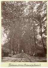 Algérie, jardin d'Essai  Vintage albumen print  Tirage albuminé  18x24