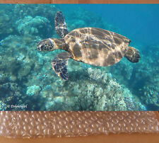 "SALE! Limited Edition Metal Print ~ Wild Sea Turtle ""Honu Wow"""