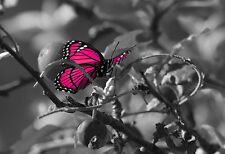 STUNNING CANVAS PINK BUTTERFLY #37 QUALITY NATURE WALL HANGING PICTURE ART A1