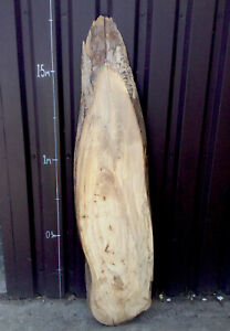 Waney Edge Live Edge Character Spalted Elm Board