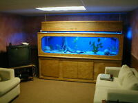 Build This Beautiful 8' Long 325 Gallon Custom Aquarium For $300