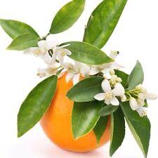 Scented Simmering Granules - for Wax Melts Oil Burners Home Fragrance Potpourri 34. Orange Blossom