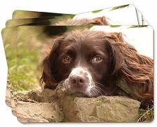 Springer Spaniel Dog Picture Placemats in Gift Box, AD-SS1P